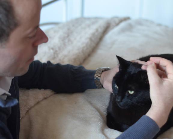 cat getting acupuncture treatment